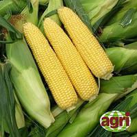 Сириус 5000 сем. кукуруза  Агризатен
