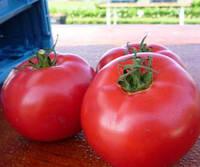 Семена томата розового Афен F1 1000  сем. Clause