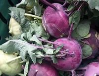 Капуста Кольраби Венская фиолетовая