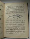 """""""Товары молочные, жировые, яичные, мясные, рыбные"""" Росторгиздат. 1961год, фото 10"""