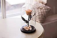 Роза в стеклянной колбе Розовый жемчуг