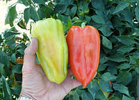 Перец Слави  F1 10 семян