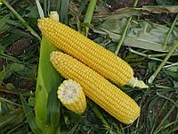 Семена кукурузы сахарной Уокер F1 Lark Seeds 25 000 шт