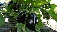 Семена баклажана Чемодан F1, 1000 шт, Lark Seeds