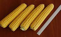 Семена кукурузы сахарной Раннее Наслаждение F1 Lark Seeds 25 000 шт