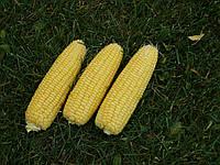 Семена кукурузы сахарной Свит Парадайз F1 Lark Seeds 25 000 шт