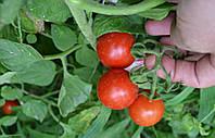 Семена томата детерминантного Старскрим F1, от 1000 шт, Lark Seeds