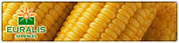 Семена кукурузы Фруктис (Евралис Семанс Гибрид  (Франция))