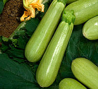 Семена кабачка Кавили F1 (Nunhems) 1000 семян - партенокарпик, ранний гибрид, светлый