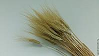 Натуральная пшеница