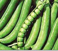 Семена гороха Джоф (Syngenta) 100000 семян / 100 тыс сем - (90-100 дней), крупнозернистый, овощной