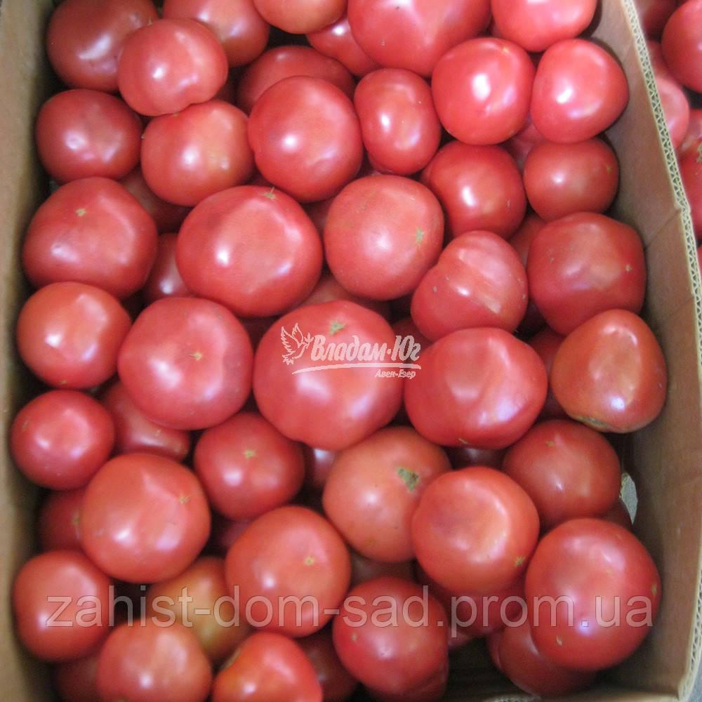 Семена томата Ханни Мун F1 (Clause) 250сем -  универсальный гибрид