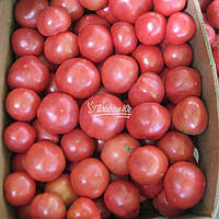 Семена томата Ханни Мун F1 (Clause) 250сем -  универсальный гибрид, фото 1