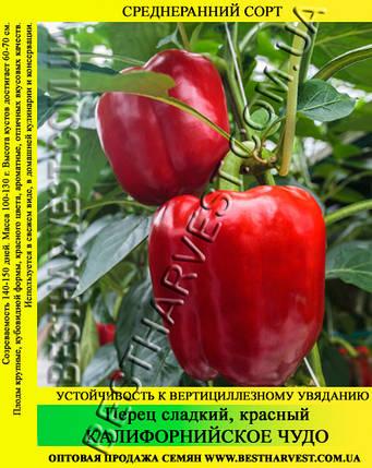Семена перца «Калифорнийское Чудо», красный 100 г, фото 2