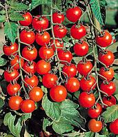 Томат Сомма F1 10 семян