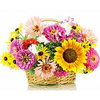 Широкий вибір насіння квітів за доступними цінами