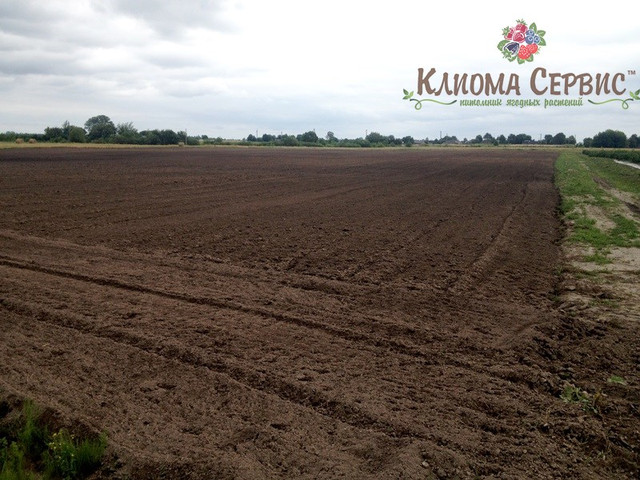 подготовка плантации под посадку малины на мульчирующую пленку