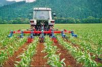 Возделывание кукурузы