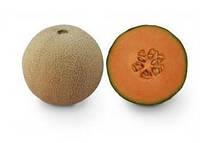 Семена дыни KS 7049 F1, от 100 шт, Kitano Seeds 100 шт.