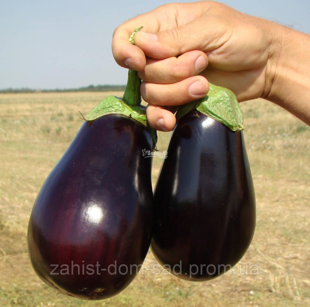 Семена баклажана Галине F1 (Clause) 50 г - ранний (60-65 дней), фиолетовый, округло-овальный