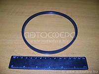 Кольцо упл. фильтра масляного МАЗ (пр-во Украина)