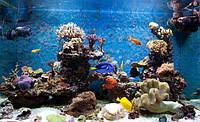 Обслуживание морского аквариума до 200 л