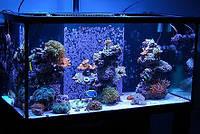 Обслуживание морских аквариумов от 200 до 400 л