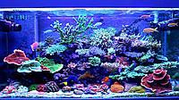 Обслуживание морских аквариумов от 400 до 600 л