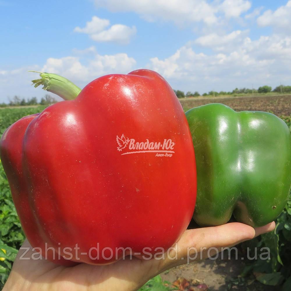 Семена перца Карисма F1 (Clause) 1000 семян - ранний (70 дней), кубовидный, красный, сладкий
