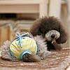 Трусы гигиенические для собаки. Одежда для собак