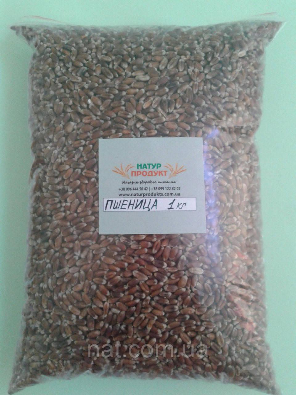 Пшеница для проращивания, 500 г (сорта Черноброва)