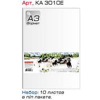 Картон цветной Графика КА3010Е бел А3 10л мелов в п/п пакете