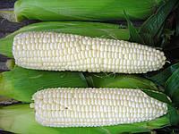 Семена сахарной кукурузы Андреевский F1, от 1000 шт, МНАГОР