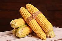 Семена сахарной кукурузы Малибу F1, МНАГОР