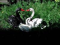 Садовые фигура Лебедь Большой