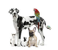 Товари для тварин - турбота без проблем!