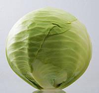Семена капусты б/к Парадокс F1, 2500 шт, Bejo
