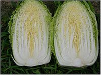 Семена пекинской капусты Ричи F1, 1000 шт, Sakata