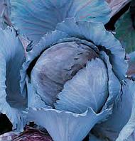 Семена капусты к/к Наско № 21335/06 F1, от 0.5г, Nasko 500 шт.
