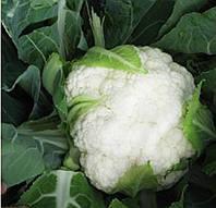 Семена цветной капусты Бригантина F1, от 1000 шт, Clause