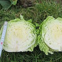 Семена капусты б/к Констебель F1, 2500 шт, Clause