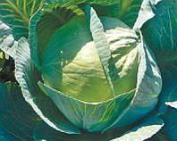 Семена капусты б/к Сторидор F1, 2500 шт, Syngenta