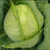 Семена капусты б/к Килагерб F1, 2500 шт, Syngenta