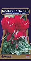 Цикламен многолетний Орфеус красный 5 сем (Голландия)