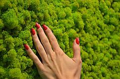 Вертикальное озеленение стабилизированным мхом