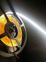 Світлодіодна LED стрічка SMD3528 240 LED/m IP20 біла Холодна (До 6500)