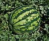 Арбуз Крисби F1/Crisby F1 Nunhems 1000 семян