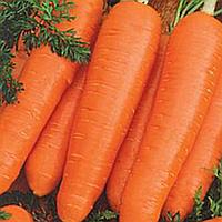 Семена моркови Катрин, 500 г, Agri Saaten