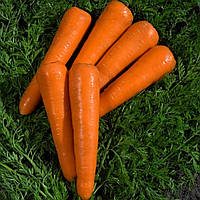 Семена моркови Канада F1, от 25000 шт, Bejo