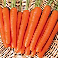 Семена моркови Мазурка, от 25 г, Nasko